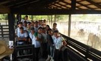 Alunos acompanham a 2ª etapa de vacinação contra febre aftosa em fazenda no Amajari