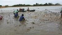 Alunos do IFRR participam de despesca em fazenda no Amajari