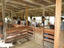 Estudantes do IFRR/CAM realizam visita técnica em Fazenda de Alto Alegre